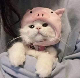 小猫的帽子戏法