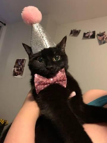 萌宠图片给猫猫们打个招呼吧!(◍´꒳`◍)-萌宠