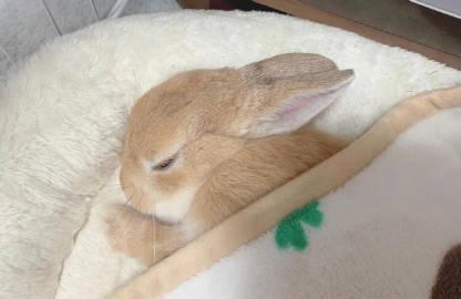 萌宠图片兔兔睡着啦-萌宠