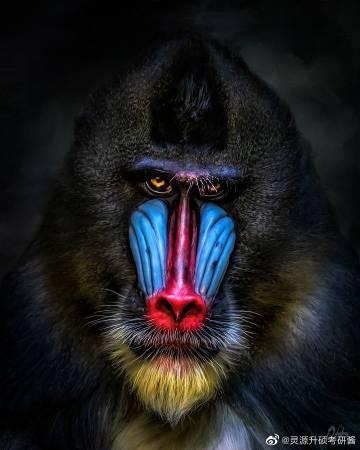 一组色彩鲜明的动物图片