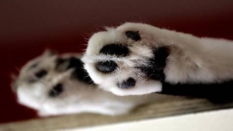 萌宠图片全球首例 比利时猫咪确诊-萌宠