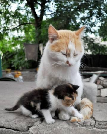 萌宠图片摄影师镜头下的流浪猫...-萌宠