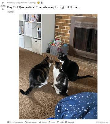 萌宠图片隔离第2天:我的猫正密谋着怎么弄死我...-萌宠