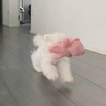 可爱小狗猛猛冲!!