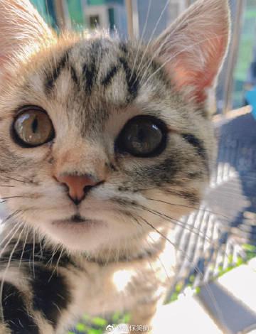 小猫咪:你今天表现很棒喔,摸摸头奖励一下...