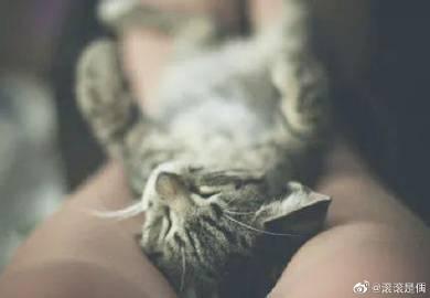 萌宠图片为何#宠物猫#宠物猫,都喜欢在主人...-萌宠