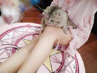 天冷了抱只猫睡还是很不错的选择 哈哈