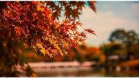 描写秋天的优美短句 表达喜欢秋天的语句