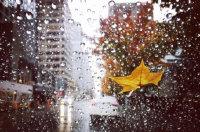 适合下雨天发的句子 描写下雨天唯美的心情短语