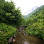 房县中国原生态娃娃鱼养殖基地