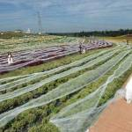 世界上最长的婚纱裙:四千米婚纱打破吉尼斯记录